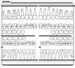 Item# 50-0500  Adult Dental Chart Sticker