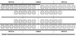 Item# 50-0540  Schematic Dental Chart Sticker