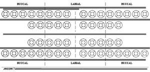 50-0540 Schematic Dental Chart Sticker