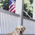 Item# RC117  Dog W/ Flag Recall Card