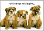 Item# RC133  Three Puppies Postcard