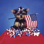Item# RC142  Patriotic Puppy Recall Postcard