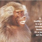 Item# RC145  Monkey Smile Dental Card