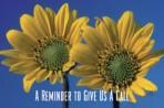 Item# RC155  Sunflower Reminder Card