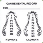 Item# V-AN432  'Canine Dental Record' Label
