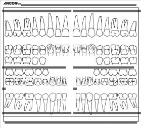 dental chart forms funf pandroid co